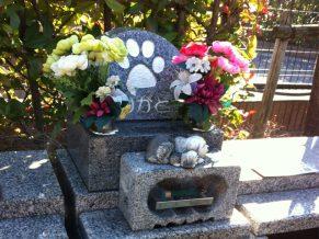 ペットのお墓はどうすればいいの?